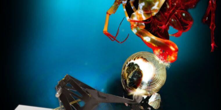 Scientists built a tiny robot to mimic the mantis shrimp's knock-out punch