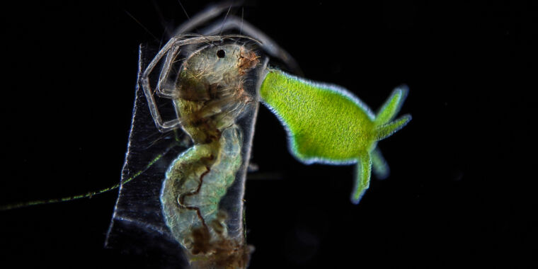 Nikon Small World microscopy contest 2021: A few of our favorite images
